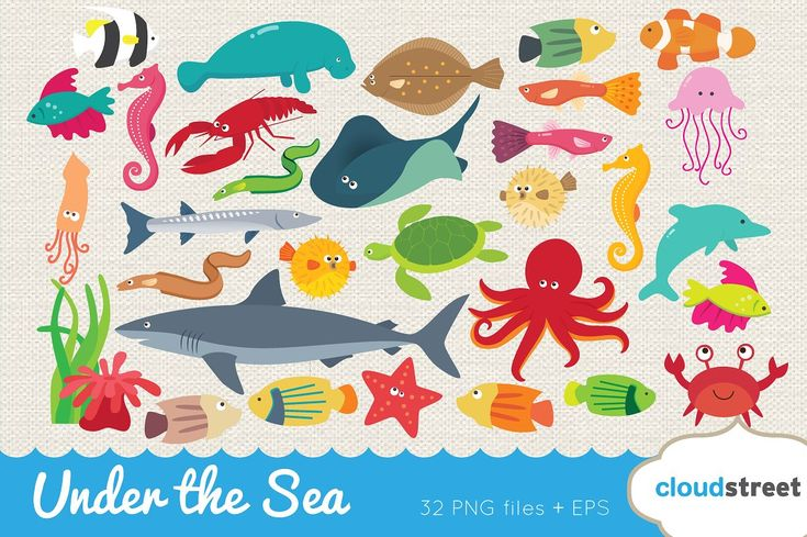 Under the Sea Clipart by cloudstreetlab on @creativemarket