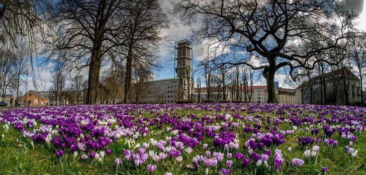 Forår ved Rådhuset. Spring by the Town Hall, Arne Jacobsen