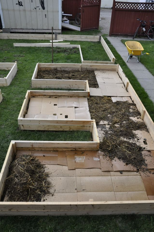Norm wanted a layered, or 'lasagna' garden, and began with cardboard mulch to kill his lawn. After that--a layer of straw/manure