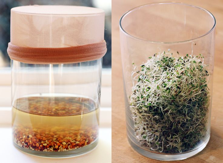 how to grow sprouts to eat