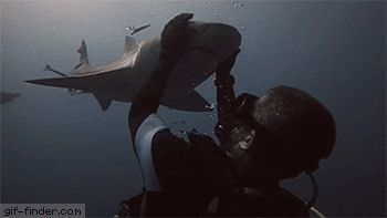 Shark Love | Gif Finder – Find and Share funny animated gifs