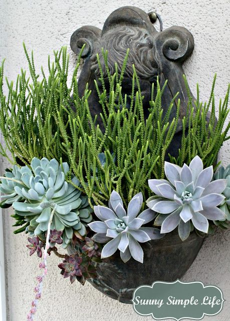 17 best ideas about growing succulents on pinterest succulents suculent plants and succulent. Black Bedroom Furniture Sets. Home Design Ideas
