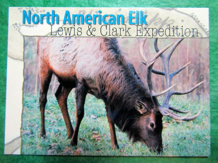 1-2002 LEWIS CLARK EXPEDITION MISSOURI CONSERVATION N AMERICAN ELK TRADING CARD