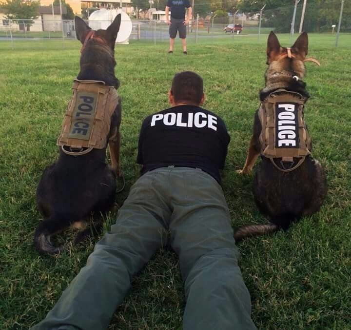 Secret service canine opportunities