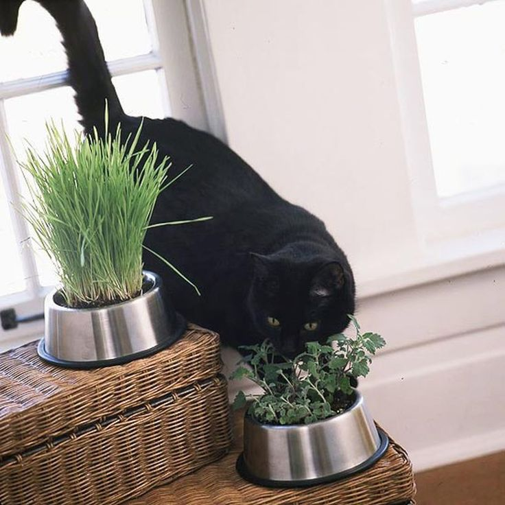 41 best home decor images on pinterest cat grass for Indoor gardening with cats