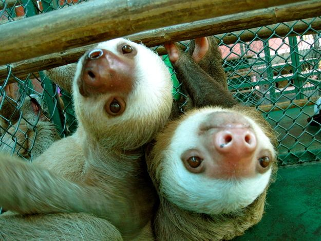 Best Sloth Gifts Accessories Images On Pinterest Sloths - 5 month old baby and sloth are the most unlikely of best friends