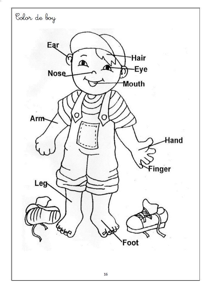 human body coloring pages witch worksheets for preschool | Human Body Coloring Pages For  human body coloring pages