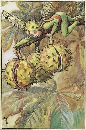 Illustration for the Horse Chestnut Fairy from Flower Fairies of the Autumn. A boy fairy lies along the branch of a horse chestnut tree.    Author / Illustrator  Cicely Mary Barker