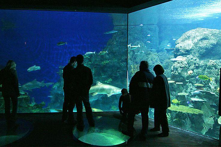 1000 Images About Downtown Aquarium Denver Colorado