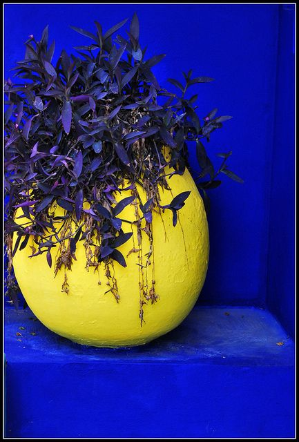 Majorelle...Marrakech  I have always LOVED this color combo!  This is the blue-ist blue!!