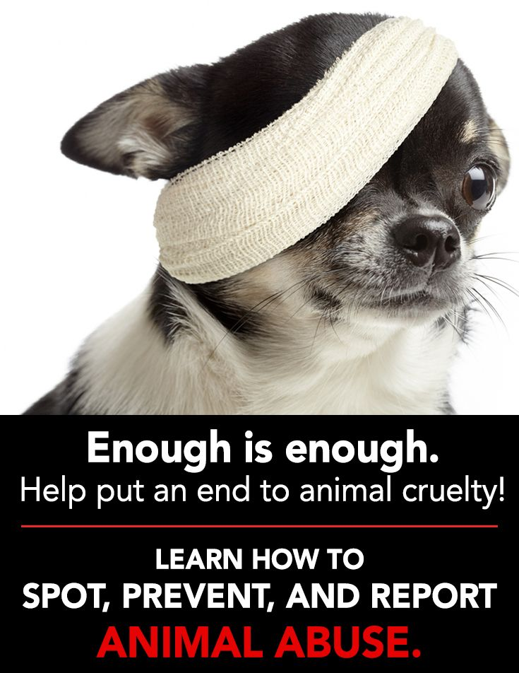 preventing animal abuse Massachusetts general laws requires a duty of care of providing basic  necessities to the animal -food, water, and shelter and, besides preventing  neglect,.