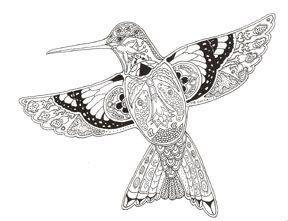 Best 25+ Hummingbird colors ideas on Pinterest | Hummingbird ...