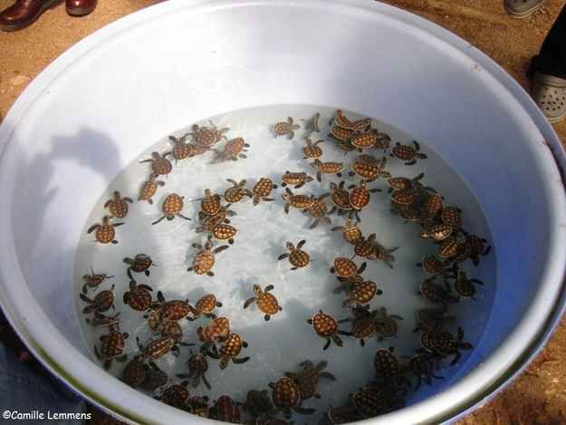 Nope. Bowl full of turtles.