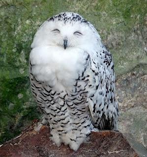 Hee hee hee!Finding Owls, Beautiful Tanx, All Thy, Cat Birds Owls, Big, Smile, Amarpreet, Gorgeous Princesses, Animal