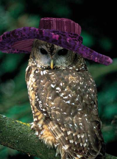 12 Best Images About Owls In Hats On Pinterest Christmas