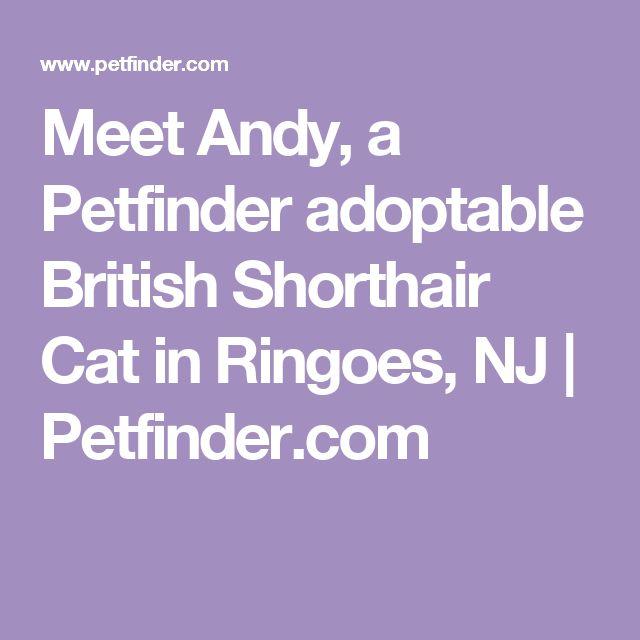 Adopt Andy on Basset hound dog, Wire fox terrier