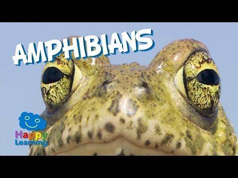 Amphibians | Educational Video for Kids - YouTube