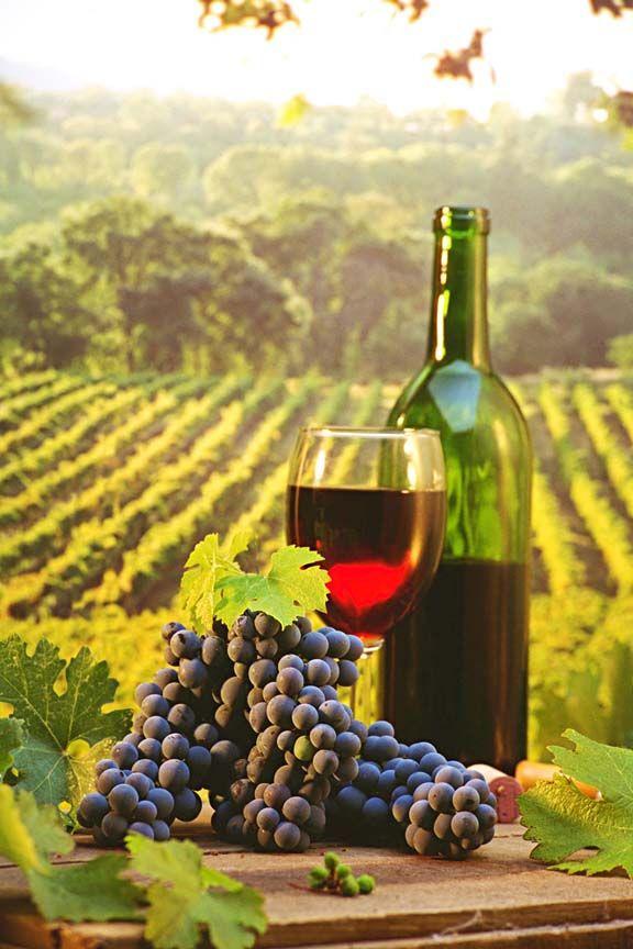 ...y florecerán como la vid; su olor será como de vino del Líbano.