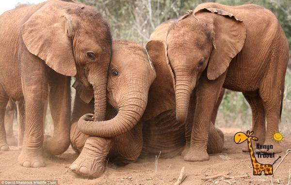 #Слонята, #Национальный_парк #Тсаво, #Кения http://travelkenya.ru/#tours