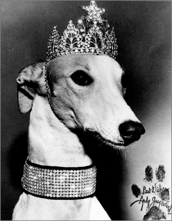 Vintage Doggy - Lady Greyhound I want my own greyhound princess to pamper ❤❤❤❤❤