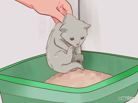 3 Ways to Litter Train a Kitten - wikiHow
