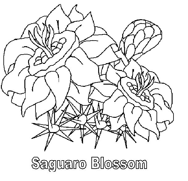 flower coloring pages and facts - photo#25
