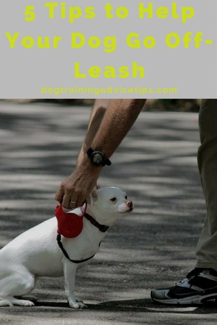 10 Remarkable Training Your Dog Proven Useful Hints And Tips