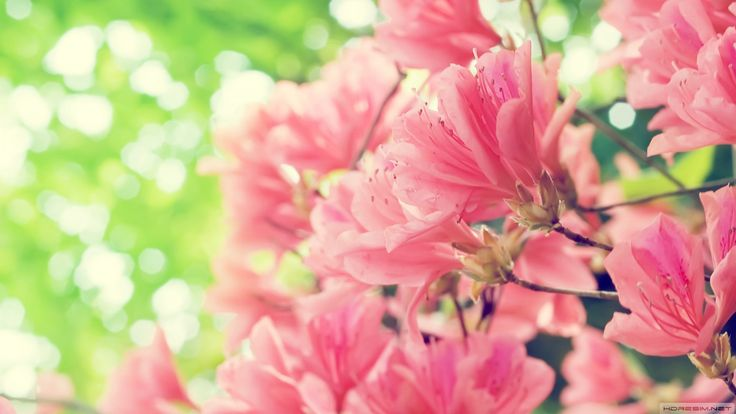 Günün Fotoğrafı/Photo Of The Day #wallpaper #Bahar #Çiçek #Flowers #Pink