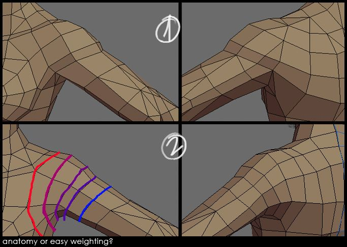 Shoulder Topology