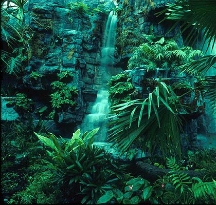 The tropical rainforest biome is mainly found in three major geographic areas around the world.    Central America- Amazon river basin   Africa- Zaire basin, with a small area in West Africa; also eastern Madagascar  Indo-Malaysia- west coast of India, Assam, Southeast Asia, New Guinea and Queensland, Australia