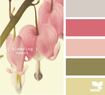 bleeding heart design seeds hues tones shades  color palette, color inspiration cards #hues #tones #shades #colorpalette #colorinspiration #designseeds