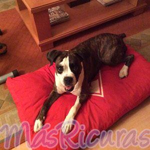 Nuestra simpática MásRicura Ura nos muestra orgullosa el colchón Wild Zone que le han comprado sus amos.