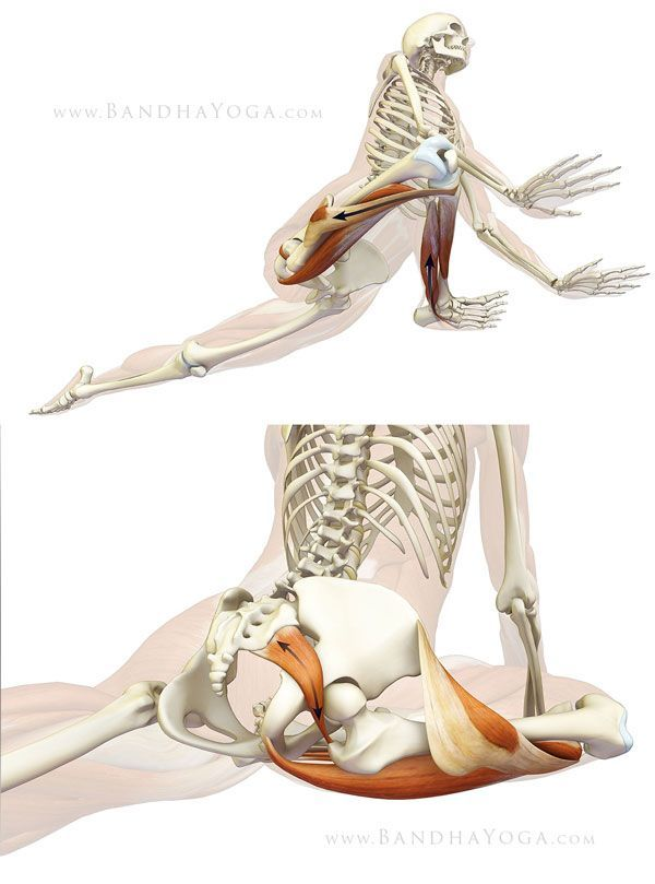 ૐ YOGA ૐ Kapotasanaૐ Postura de la Paloma. Protección de la rodilla en Postura de Paloma: Se ilustra la contratación de los Músculos en el exterior de la Rodilla. en la parte Inferior muestra el músculo Piriformis o Piramidal que se estira en la Postura de Paloma.. Protecting the knee in Pigeon Pose: Top illustrates engaging the muscles on the outside of the knee. Bottom shows the piriformis muscle stretching in Pigeon Pose.