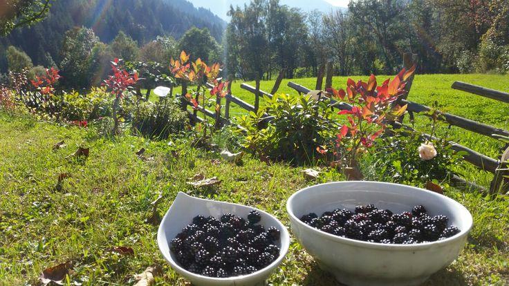 Ernte der Brombeeren aus unserem Garten vom Hotel Almrausch in Bad Kleinkirchheim   www.almrausch.co.at