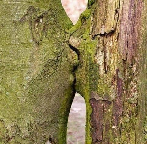 Kiss Of Nature