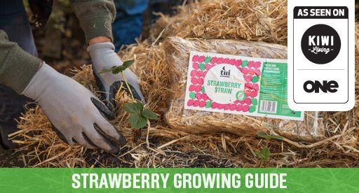 Tui Garden | Strawberry Growing Guide