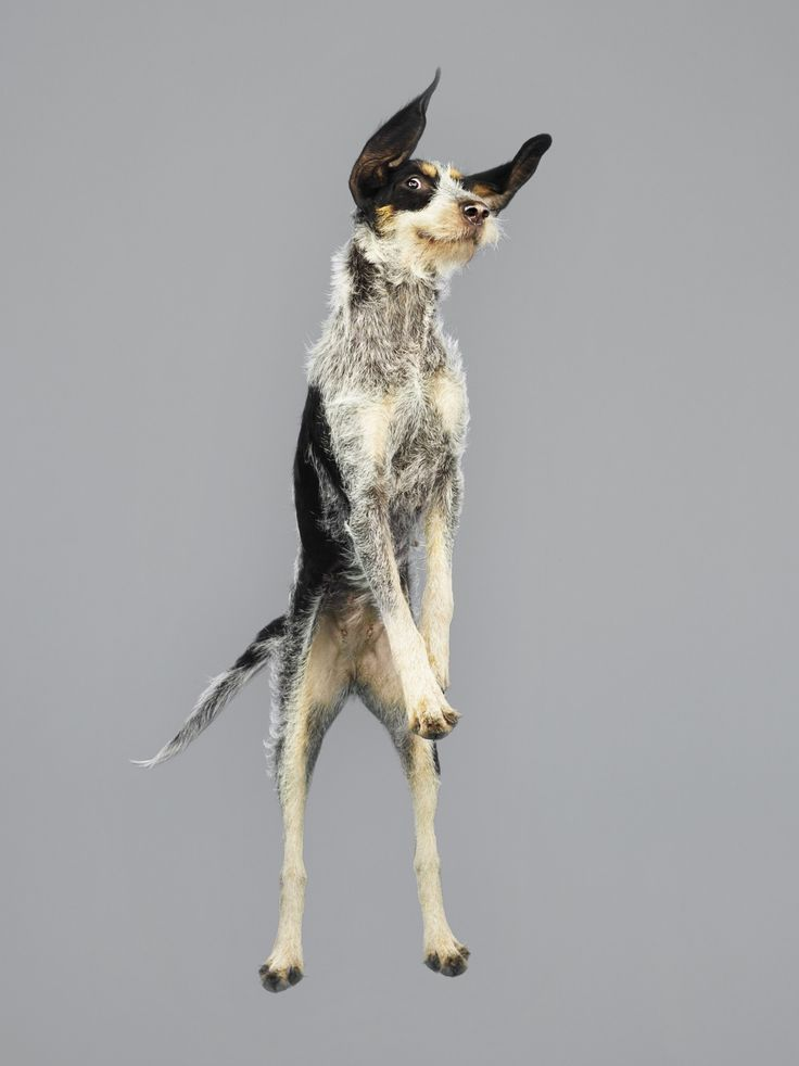 Flying dogs –in pictures