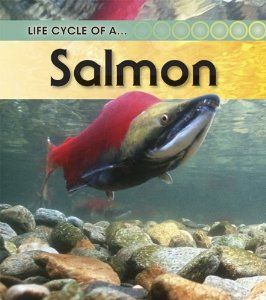 Salmon (Life Cycle of A...(Heinemann Paperback)): Angela Royston: 9781432925437: Amazon.com: Books