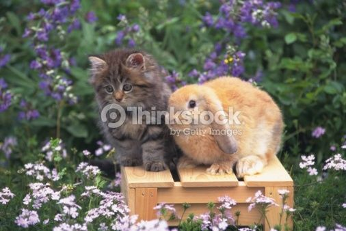 Stock Photo : Image of a Kitten and a Lop Ear Rabbit Standing on a Wooden Box, Looking Sideways, Surrounded By Flowers, Front View, Differential Focus
