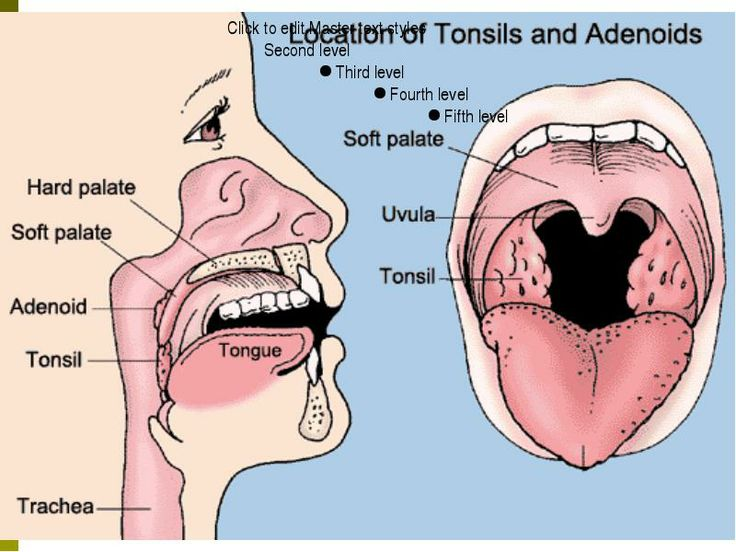 Fancy Tonsils Anatomy And Physiology Illustration - Anatomy And ...