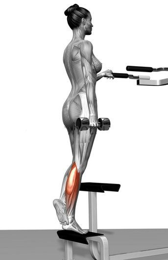 8 best images about The best calf building exercises on ...