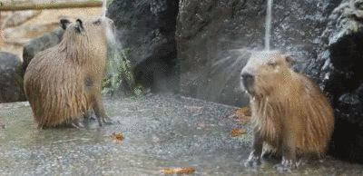 En underbar dusch