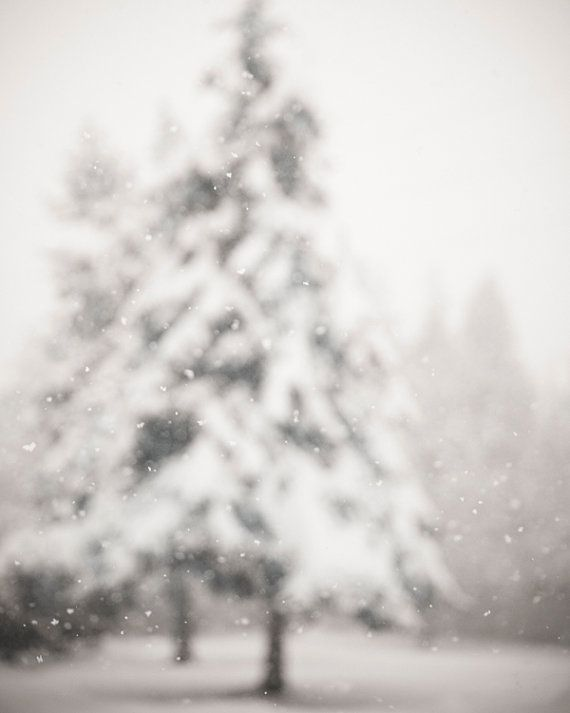 Snow photography, winter home decor by Treetop Photo Shop