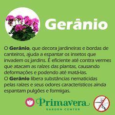 primavera-garden-geranio