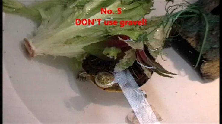 Top 10 DON'TS in caring for a Red Eared Slider Turtle. Part 1