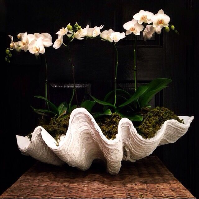 Orchids in Clam