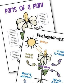 Parts of a plant and photosynthesis anchor charts *freebie*