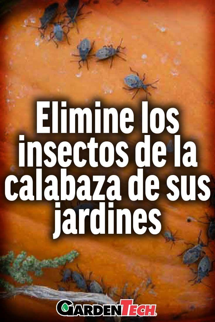 Los insectos de la calabaza son una de las causas más comunes de daños a las plantas de calabaza.