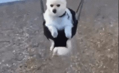This guy who pretty much loves it. | 23 Adorable Dogs On Swings
