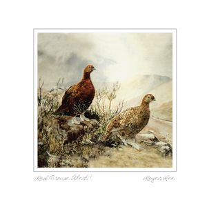 Red grouse alert painting by Roger Lee